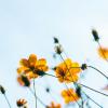 Spring Plumbing Checklist